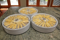 Bananas on stacked trays