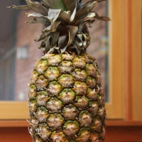Step 1 - the pineapple