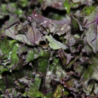 Step 1 - Wash kale