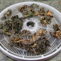 Step 7 - Place coated kale on dehydrator trays