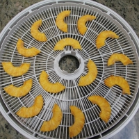 Step  5 - Finished dehydrated pineapple slices!