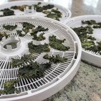Asian kale chips finished - enjoy!