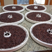 Step 7 - Pour 2 cups of black beans onto each fruit leather sheet