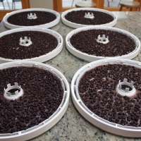 Step 9 - Dehydrated Black Beans