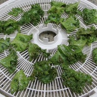 Step 5 - Once all the leaves are coated, place on dehydrator trays