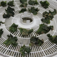 Kale Chips - after 2 hours in dehydrator... Finished!